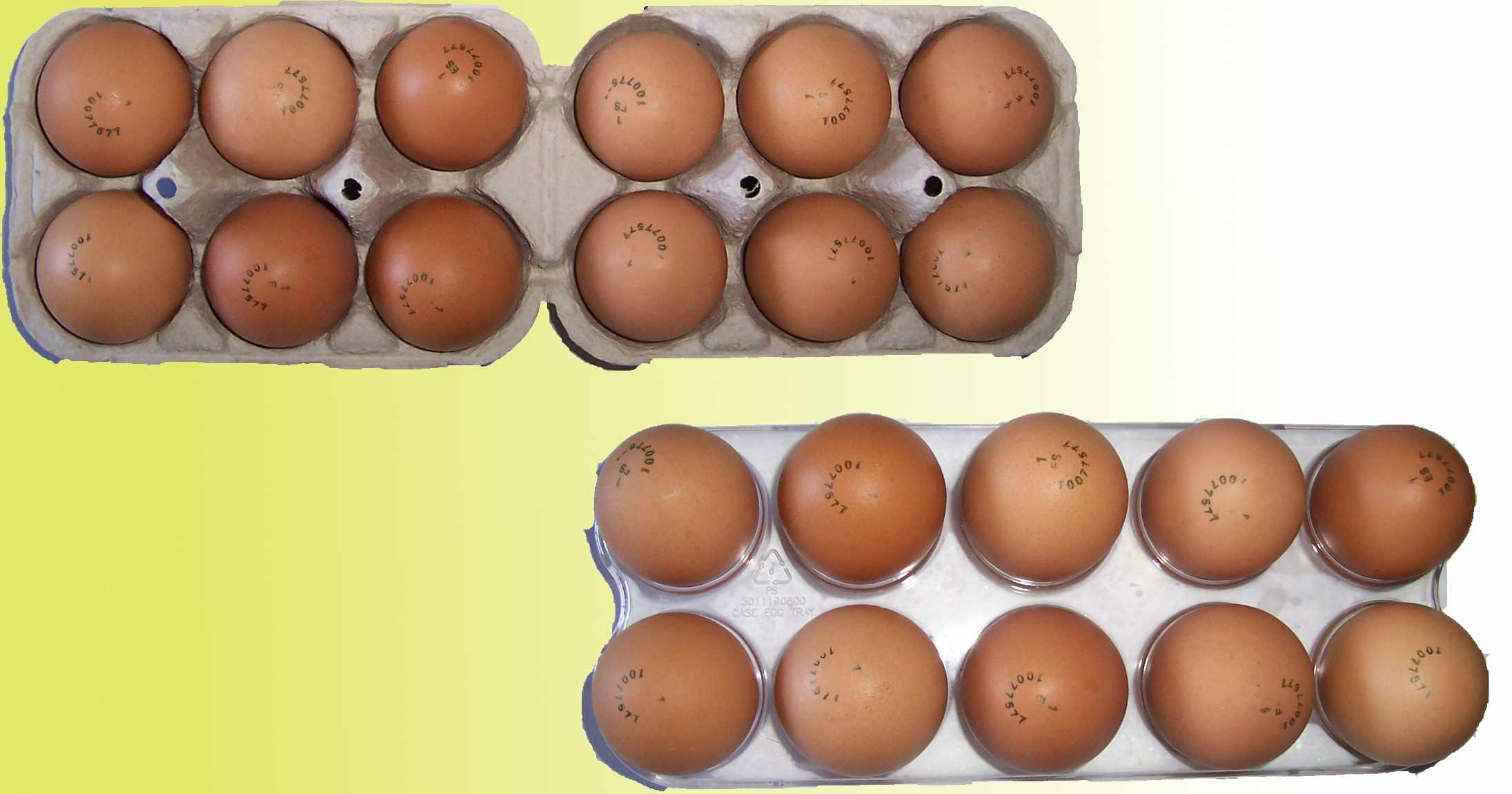 1 1 expresiones algebraicas contenidos - Envases de huevos ...