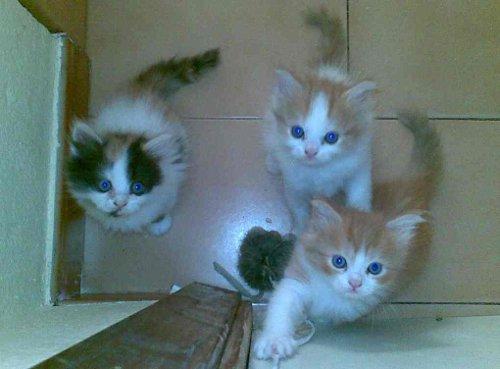 Imagenes con movimiento gatos - Imagui